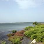 Jaffna Island Site 1