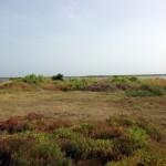 Jaffna Island Site 2